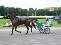 The Harness Racing Connection