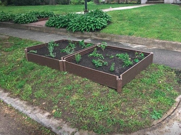 Curbside gardens growing