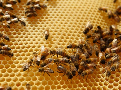 Bee Loss Highest Yet