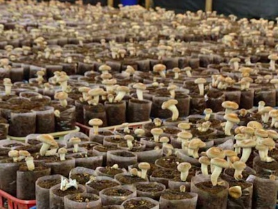 Grow Mushrooms in your Grounds