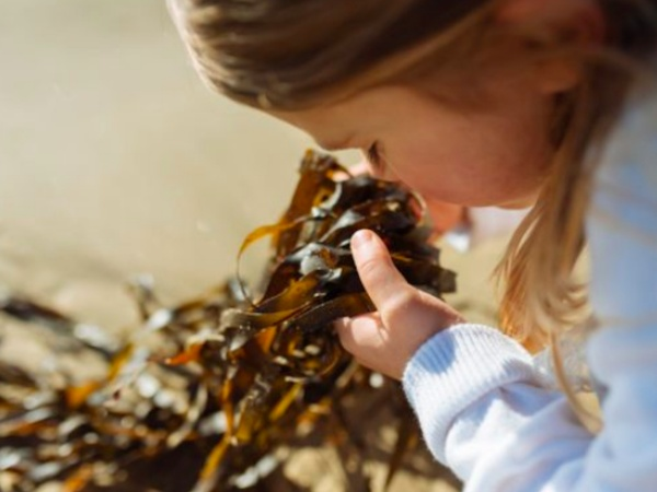 Girls and Seaweed